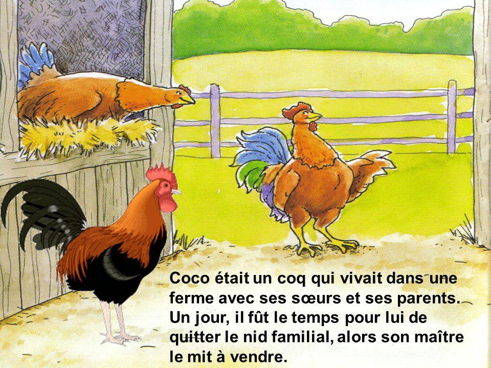Coco était un coq qui vivait dans une ferme avec ses sœurs et ses parents.