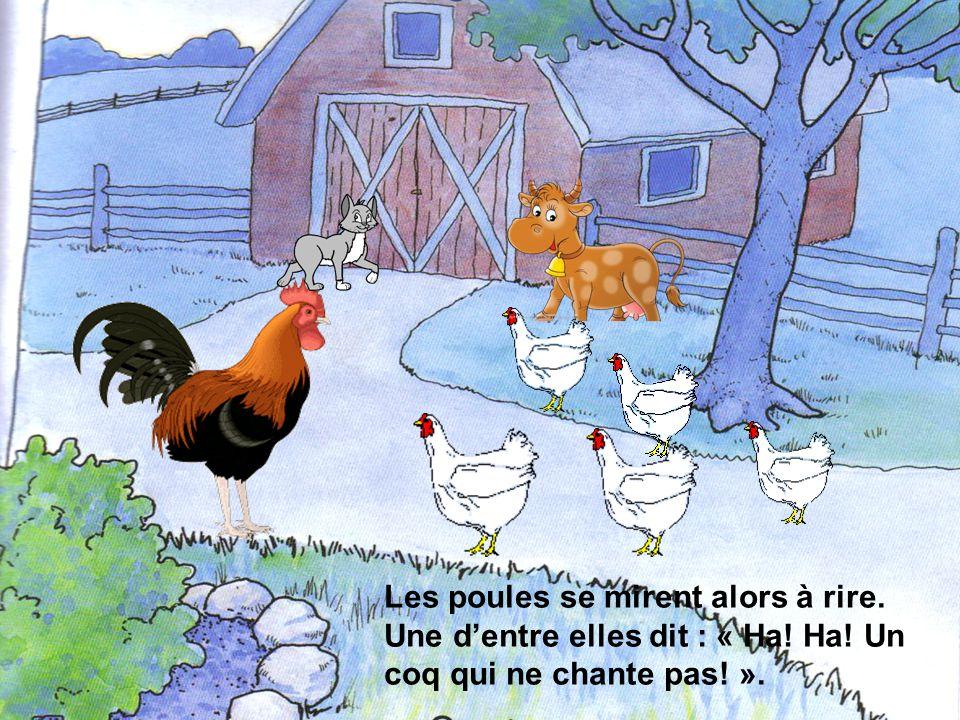 Les poules se mirent alors à rire. Une dentre elles dit : « Ha! Ha! Un coq qui ne chante pas! ».