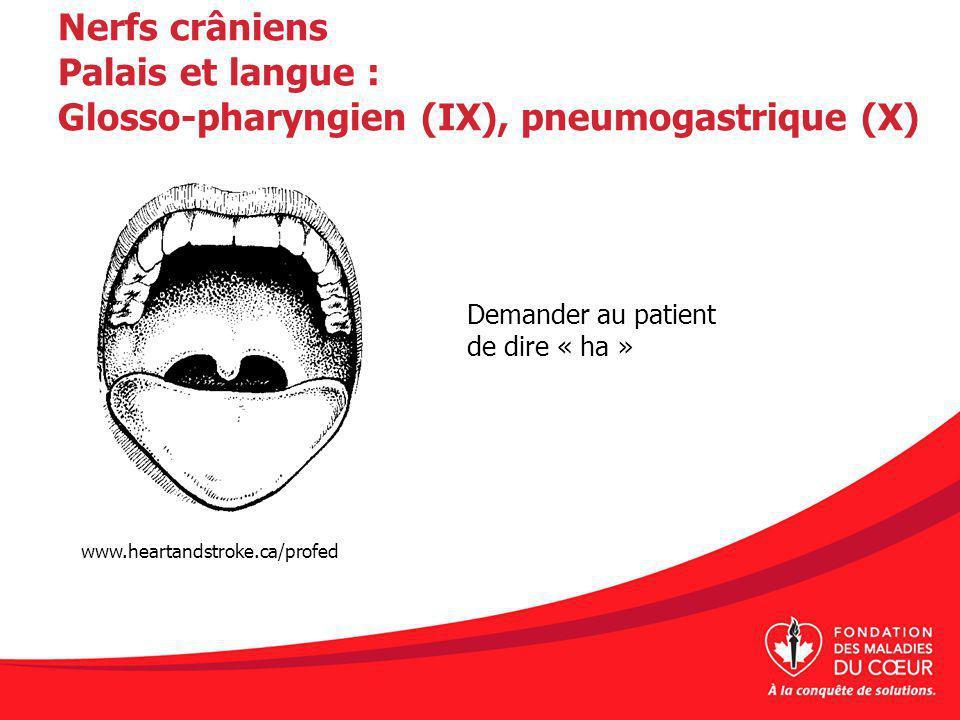 Nerfs crâniens Palais et langue : Glosso-pharyngien (IX), pneumogastrique (X) Demander au patient de dire « ha » www.heartandstroke.ca/profed