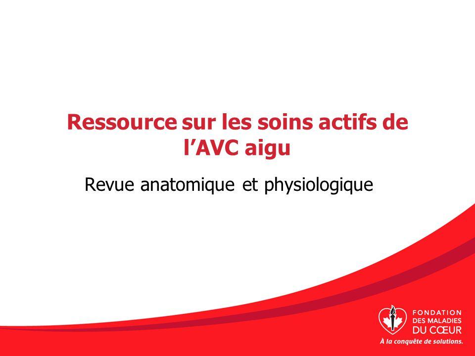 Ressource sur les soins actifs de lAVC aigu Revue anatomique et physiologique