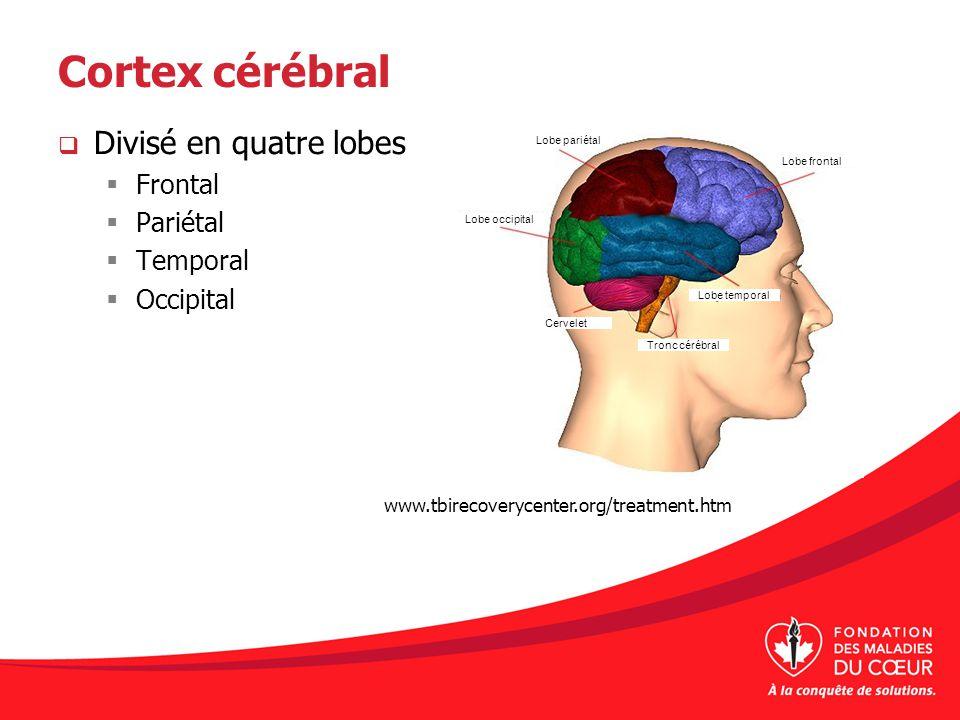 Cortex cérébral Divisé en quatre lobes Frontal Pariétal Temporal Occipital www.tbirecoverycenter.org/treatment.htm Lobe pariétal Lobe frontal Lobe occ