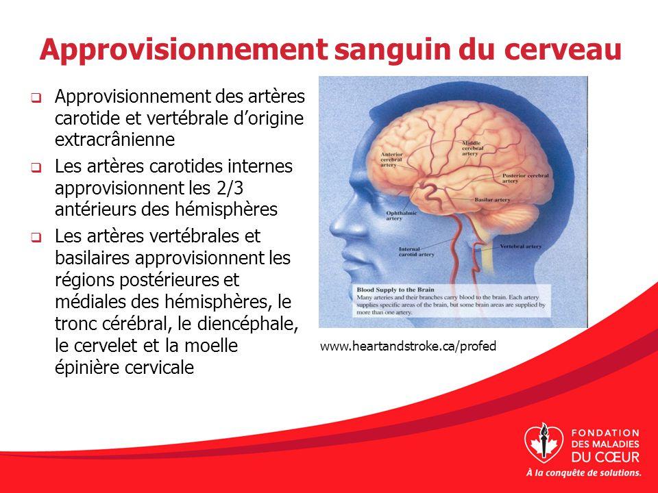 Approvisionnement sanguin du cerveau Approvisionnement des artères carotide et vertébrale dorigine extracrânienne Les artères carotides internes appro