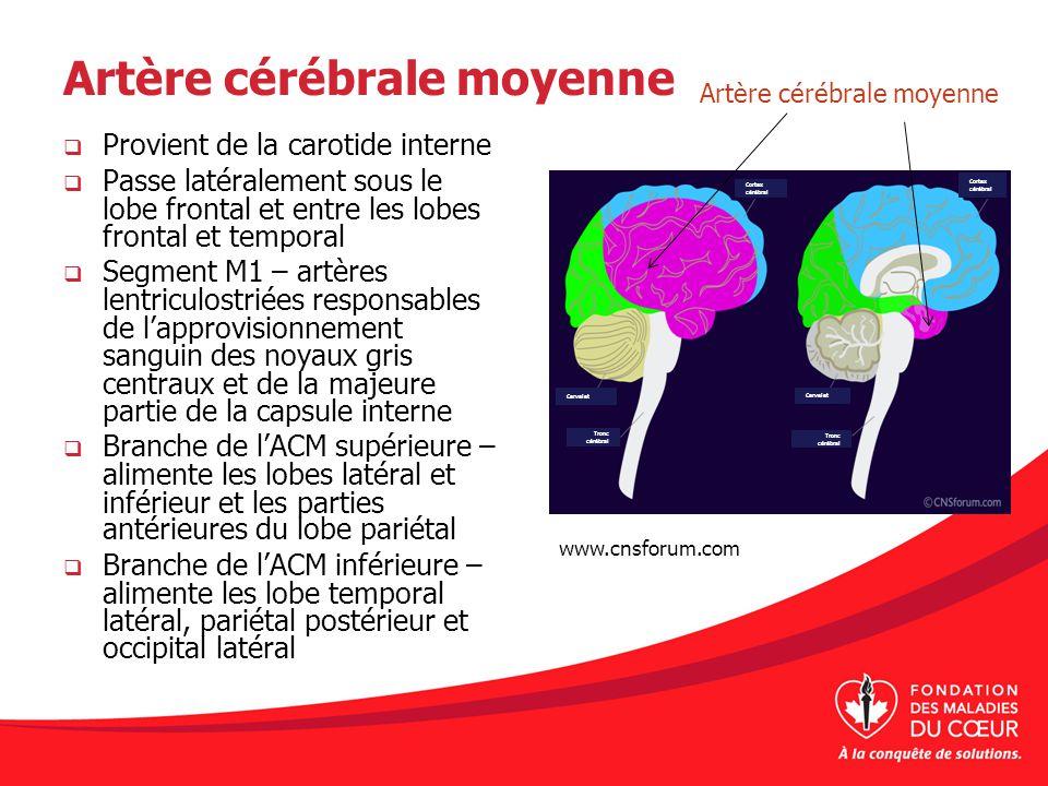 Artère cérébrale moyenne Provient de la carotide interne Passe latéralement sous le lobe frontal et entre les lobes frontal et temporal Segment M1 – a