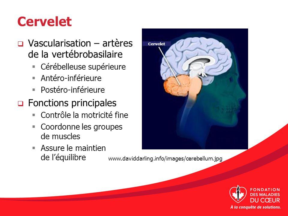 Cervelet Vascularisation – artères de la vertébrobasilaire Cérébelleuse supérieure Antéro-inférieure Postéro-inférieure Fonctions principales Contrôle