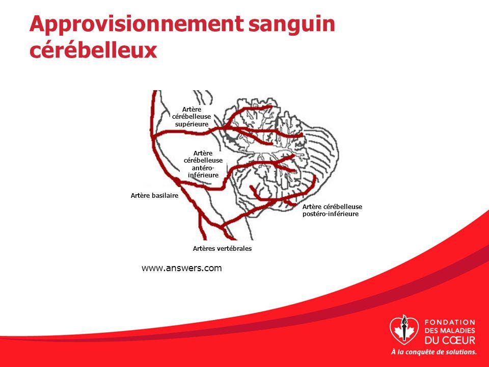 Approvisionnement sanguin cérébelleux www.answers.com Artère cérébelleuse supérieure Artère cérébelleuse antéro- inférieure Artère basilaire Artères v