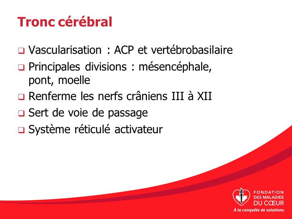 Tronc cérébral Vascularisation : ACP et vertébrobasilaire Principales divisions : mésencéphale, pont, moelle Renferme les nerfs crâniens III à XII Ser