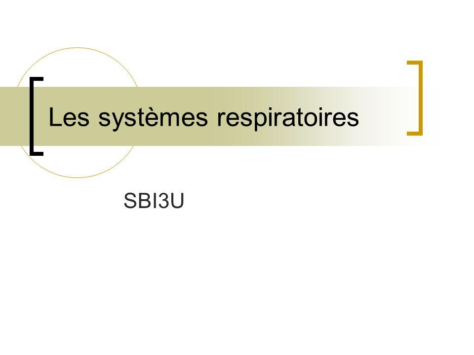 Réflexe de distension pulmonaire : Des mécanorécepteurs situés dans les parois des bronches et des bronchioles perçoivent leur distension et inhibent les centres respiratoires du bulbe rachidien.