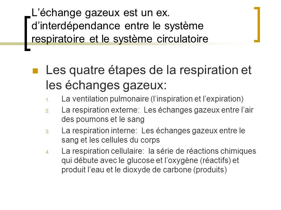Léchange gazeux est un ex. dinterdépendance entre le système respiratoire et le système circulatoire Les quatre étapes de la respiration et les échang