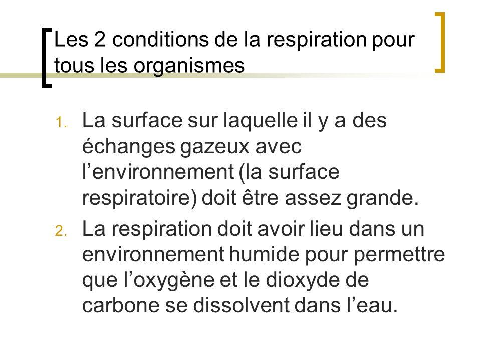 Les 2 conditions de la respiration pour tous les organismes 1. La surface sur laquelle il y a des échanges gazeux avec lenvironnement (la surface resp
