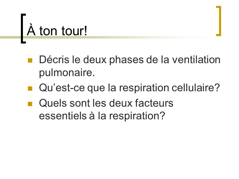 À ton tour! Décris le deux phases de la ventilation pulmonaire. Quest-ce que la respiration cellulaire? Quels sont les deux facteurs essentiels à la r