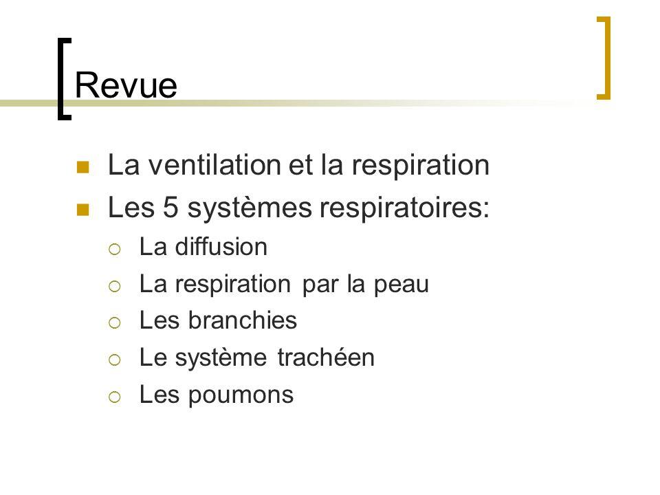 Revue La ventilation et la respiration Les 5 systèmes respiratoires: La diffusion La respiration par la peau Les branchies Le système trachéen Les poumons