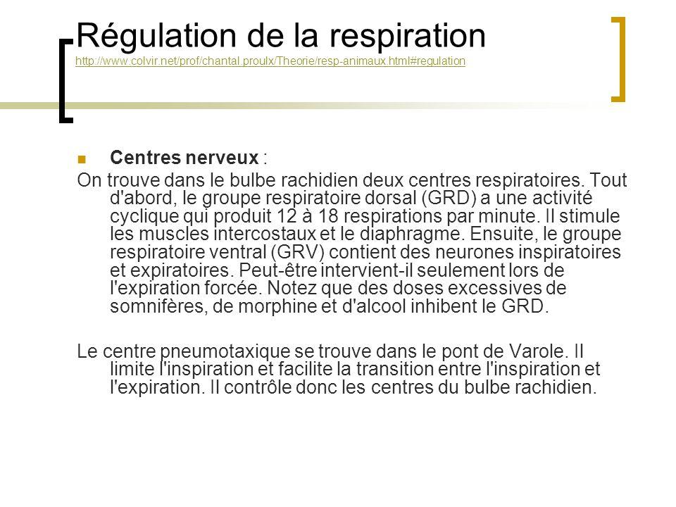 Régulation de la respiration http://www.colvir.net/prof/chantal.proulx/Theorie/resp-animaux.html#regulation http://www.colvir.net/prof/chantal.proulx/Theorie/resp-animaux.html#regulation Centres nerveux : On trouve dans le bulbe rachidien deux centres respiratoires.