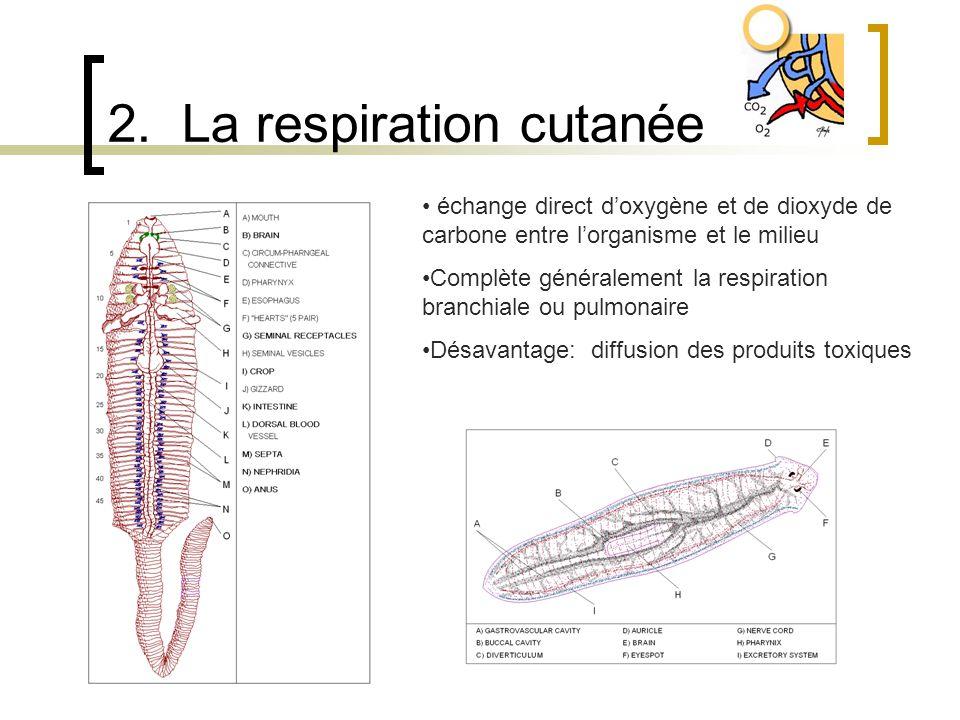 2. La respiration cutanée échange direct doxygène et de dioxyde de carbone entre lorganisme et le milieu Complète généralement la respiration branchia