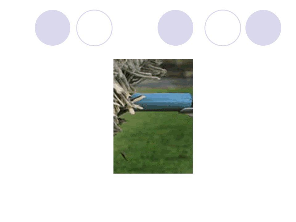 Chien de berger hongrois Il franchit une haie lors dun concours canin
