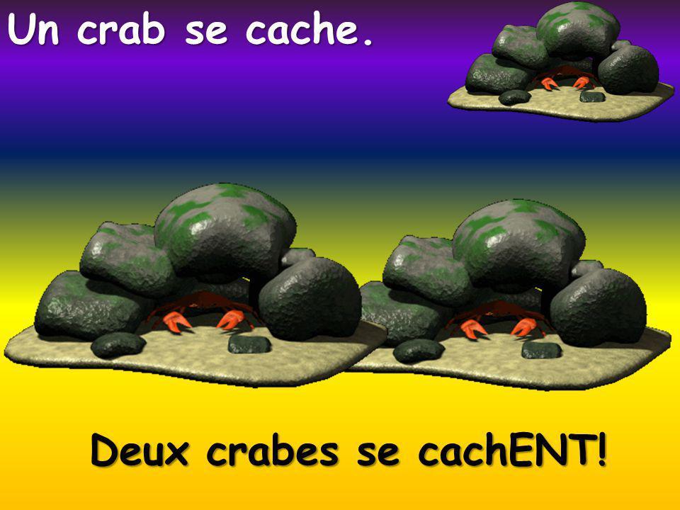 Deux crabes se cachENT! Un crab se cache.