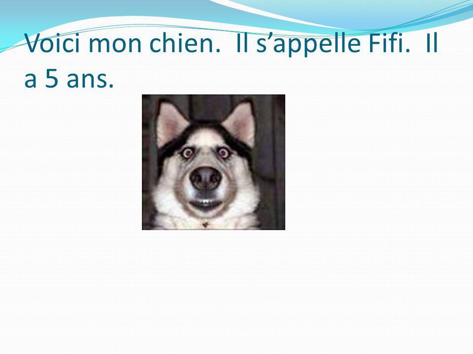 Voici mon chien. Il sappelle Fifi. Il a 5 ans.