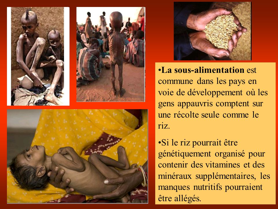 La sous-alimentation est commune dans les pays en voie de développement où les gens appauvris comptent sur une récolte seule comme le riz. Si le riz p