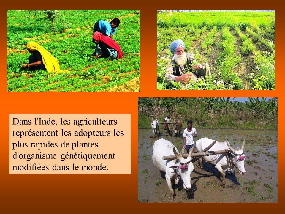 Dans l'Inde, les agriculteurs représentent les adopteurs les plus rapides de plantes d'organisme génétiquement modifiées dans le monde.