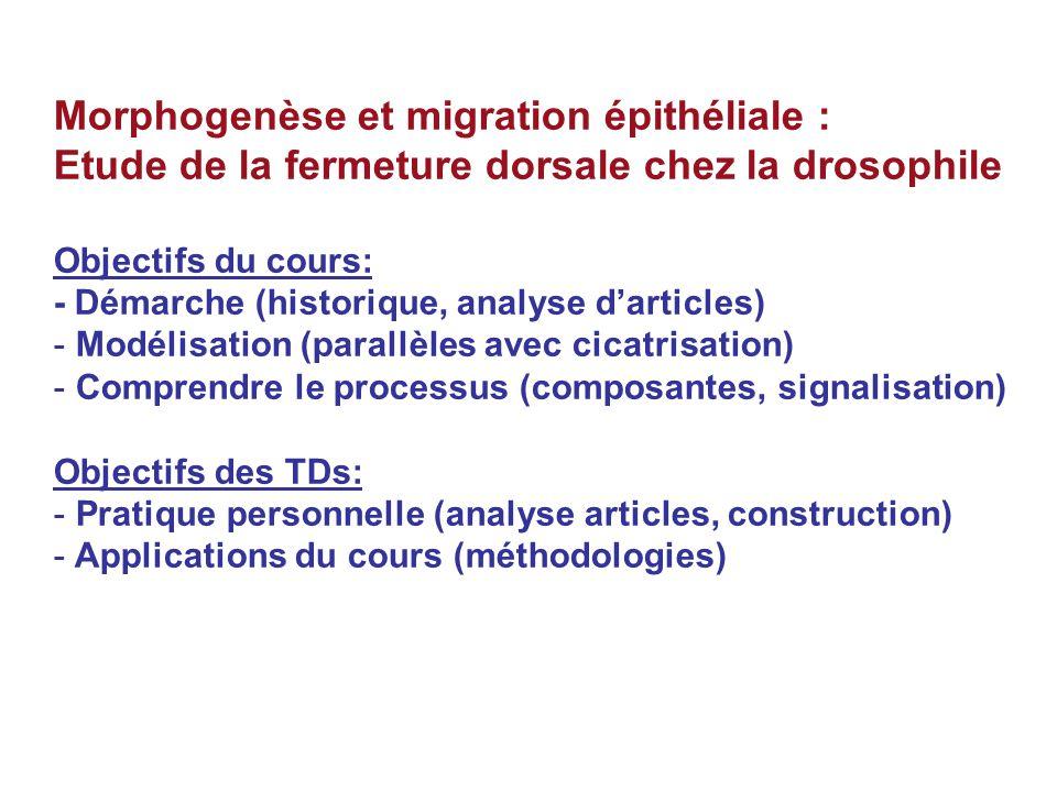 Morphogenèse et migration épithéliale : Etude de la fermeture dorsale chez la drosophile Objectifs du cours: - Démarche (historique, analyse darticles) - Modélisation (parallèles avec cicatrisation) - Comprendre le processus (composantes, signalisation) Objectifs des TDs: - Pratique personnelle (analyse articles, construction) - Applications du cours (méthodologies)
