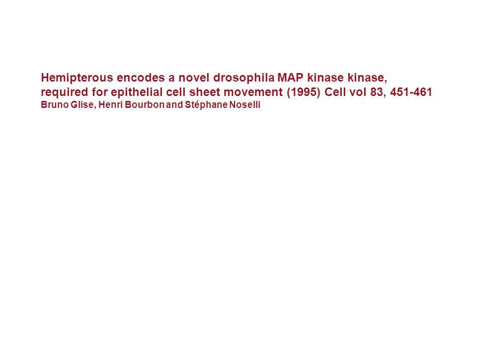 Hemipterous encodes a novel drosophila MAP kinase kinase, required for epithelial cell sheet movement (1995) Cell vol 83, 451-461 Bruno Glise, Henri B
