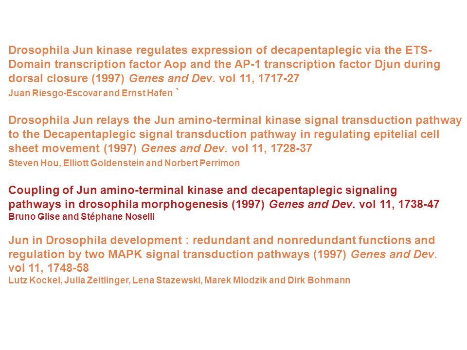 Drosophila Jun kinase regulates expression of decapentaplegic via the ETS- Domain transcription factor Aop and the AP-1 transcription factor Djun during dorsal closure (1997) Genes and Dev.
