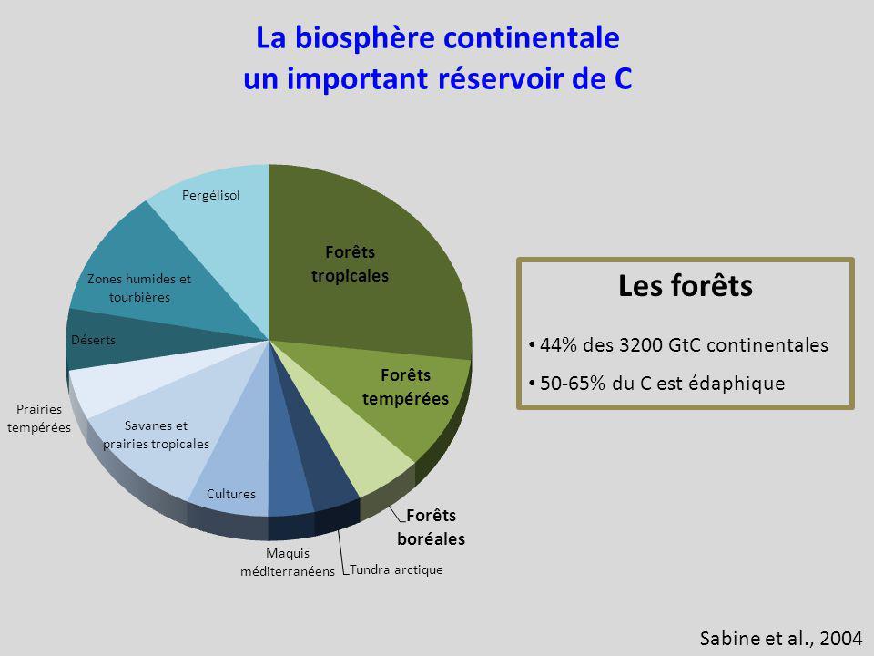 La biosphère continentale un important réservoir de C Les forêts 44% des 3200 GtC continentales 50-65% du C est édaphique Sabine et al., 2004