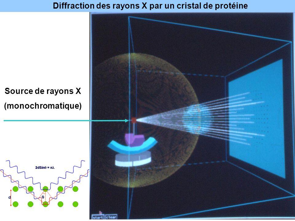 Source de rayons X (monochromatique) Diffraction des rayons X par un cristal de protéine