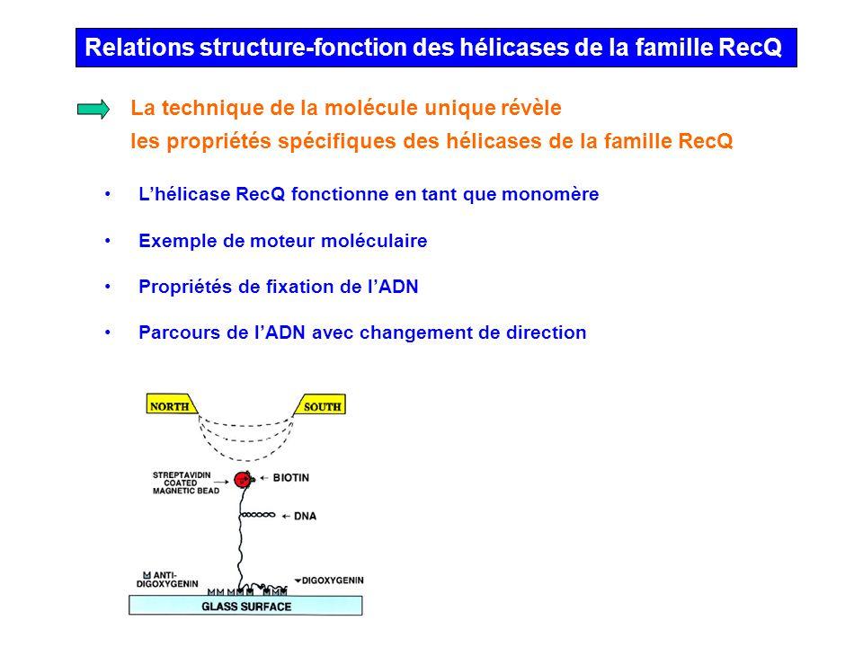 Relations structure-fonction des hélicases de la famille RecQ Lhélicase RecQ fonctionne en tant que monomère Exemple de moteur moléculaire Propriétés