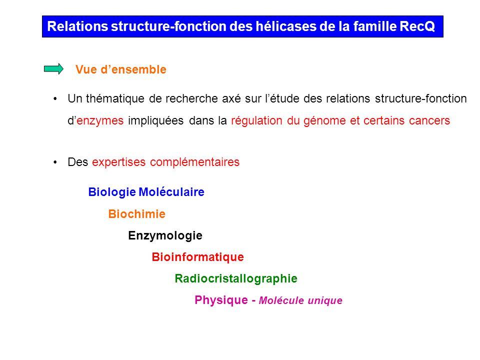 Relations structure-fonction des hélicases de la famille RecQ Un thématique de recherche axé sur létude des relations structure-fonction denzymes impl