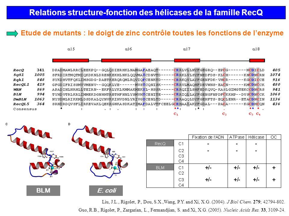 Relations structure-fonction des hélicases de la famille RecQ BLME. coli Etude de mutants : le doigt de zinc contrôle toutes les fonctions de lenzyme