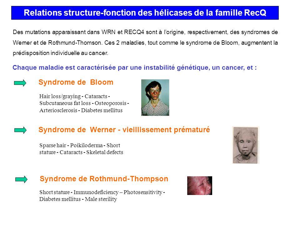 Relations structure-fonction des hélicases de la famille RecQ Syndrome de Bloom Syndrome de Werner - vieillissement prématuré Syndrome de Rothmund-Tho