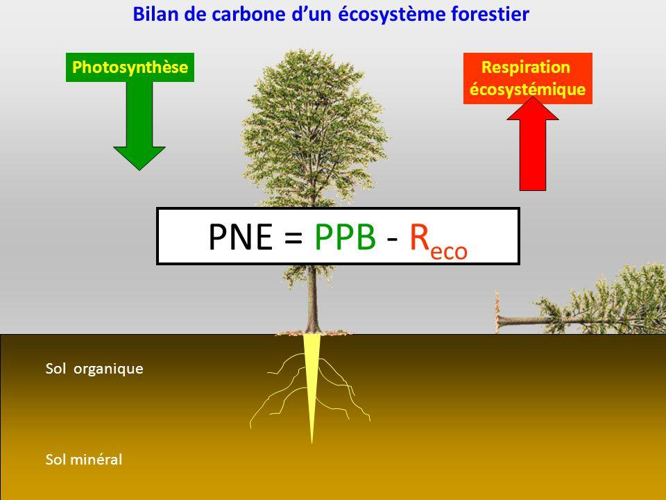 Sol minéral Sol organique PhotosynthèseRespiration écosystémique PNE = PPB - R eco Bilan de carbone dun écosystème forestier