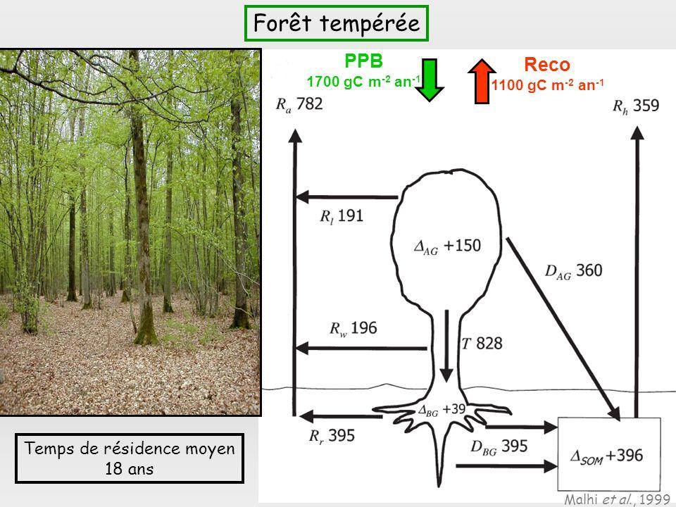 Temps de résidence moyen 18 ans Forêt tempérée Malhi et al., 1999 PPB 1700 gC m -2 an -1 Reco 1100 gC m -2 an -1