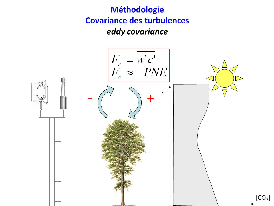 Méthodologie Covariance des turbulences eddy covariance [CO 2 ] h + -