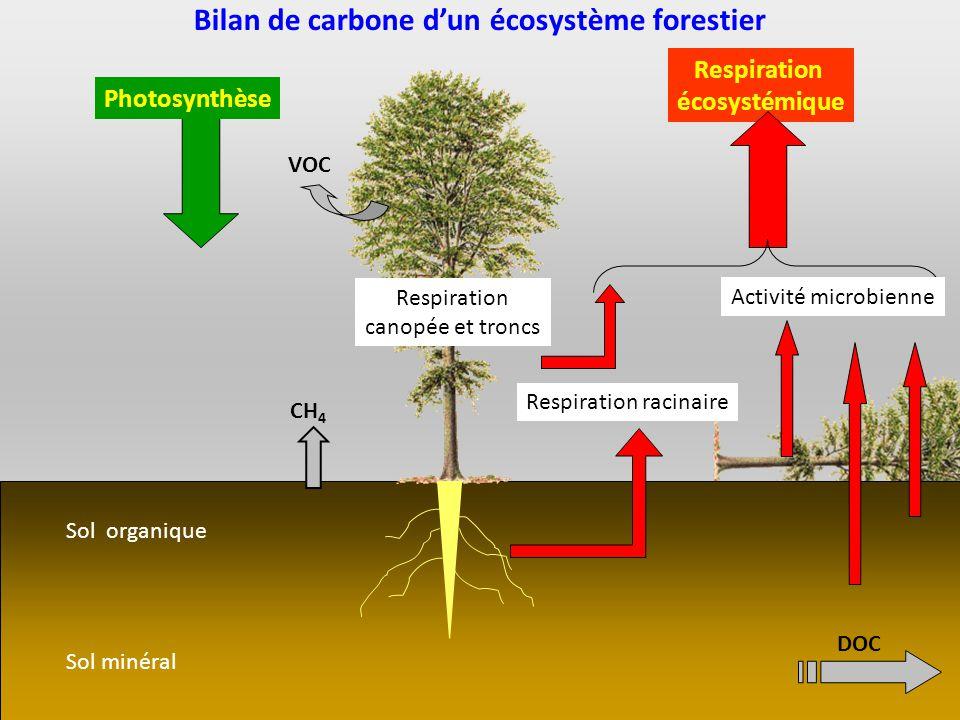 Sol minéral Sol organique Bilan de carbone dun écosystème forestier Photosynthèse Respiration écosystémique Activité microbienne Respiration canopée e