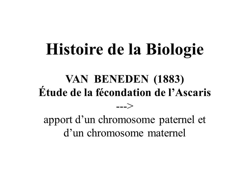 Histoire de la Biologie VAN BENEDEN (1883) Étude de la fécondation de lAscaris ---> apport dun chromosome paternel et dun chromosome maternel
