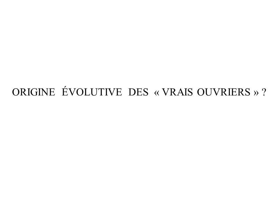 ORIGINE ÉVOLUTIVE DES « VRAIS OUVRIERS » ?