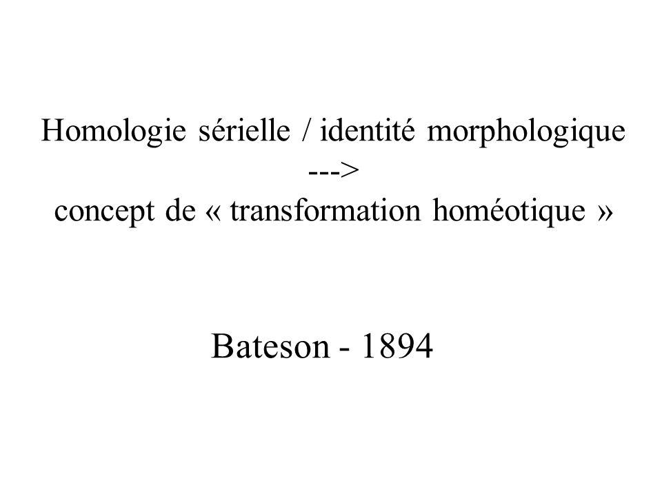 Homologie sérielle / identité morphologique ---> concept de « transformation homéotique » Bateson - 1894