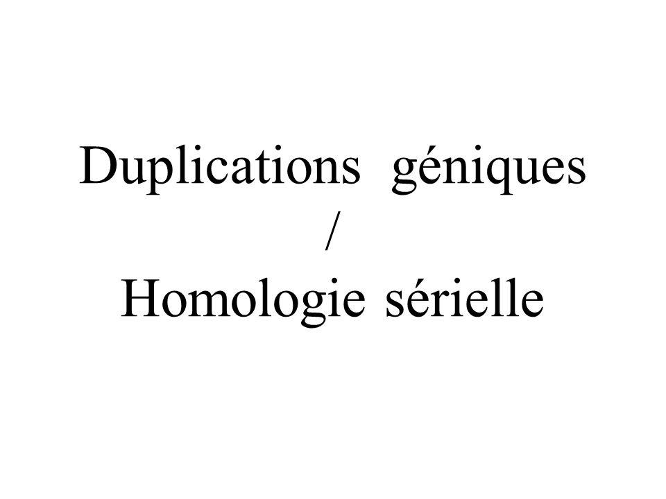 Duplications géniques / Homologie sérielle
