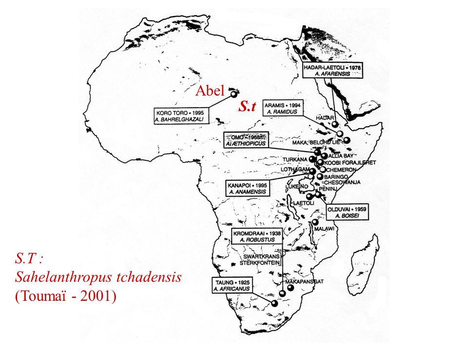 S.t S.T : Sahelanthropus tchadensis (Toumaï - 2001) Abel