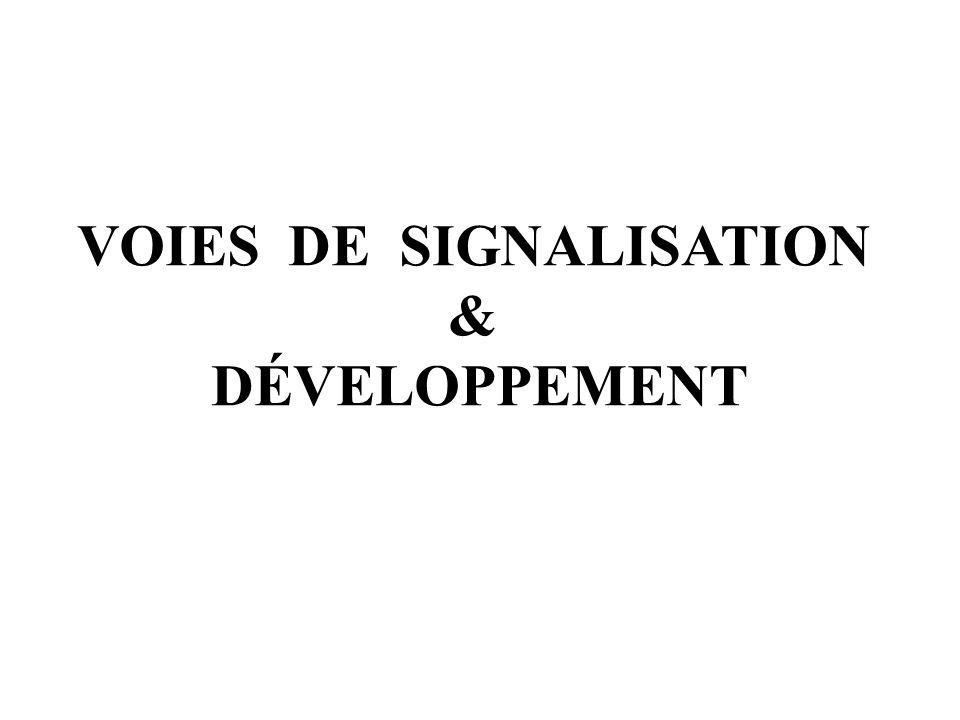 VOIES DE SIGNALISATION & DÉVELOPPEMENT