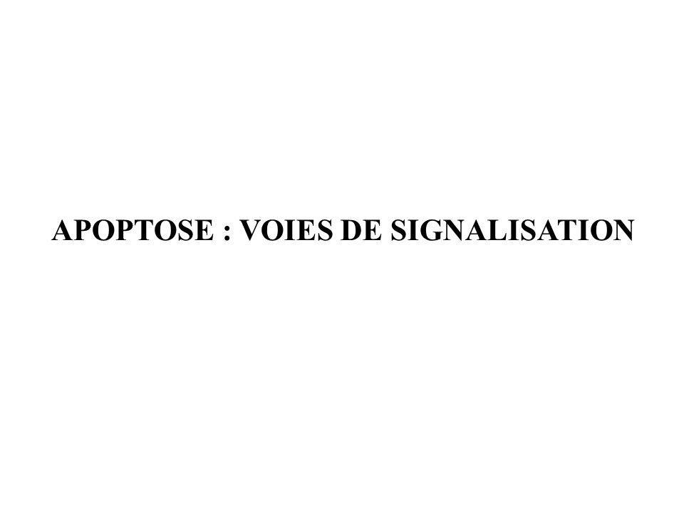 APOPTOSE : VOIES DE SIGNALISATION