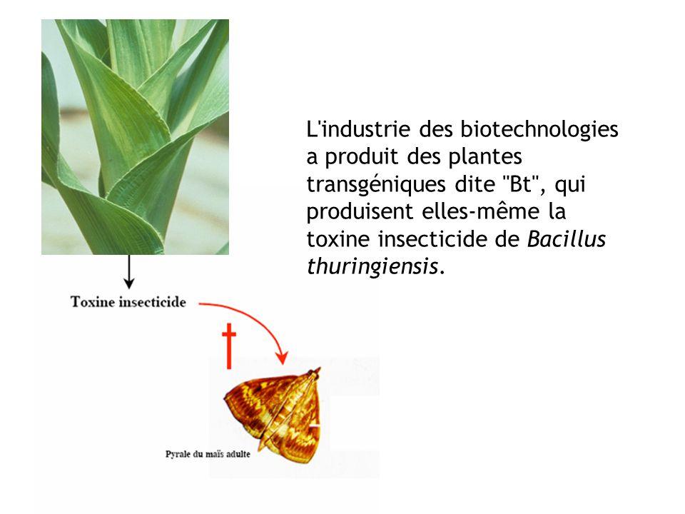 L'industrie des biotechnologies a produit des plantes transgéniques dite