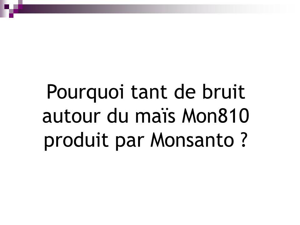 Pourquoi tant de bruit autour du maïs Mon810 produit par Monsanto ?