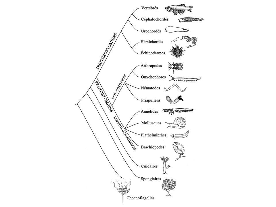 Prévost et Dumas (1824) Spermatozoïdes : chez tous les mâles (pas chez le mulet) ---> ce ne sont pas des parasites Hypothèse : les spermatozoïdes pénètrent dans lœuf