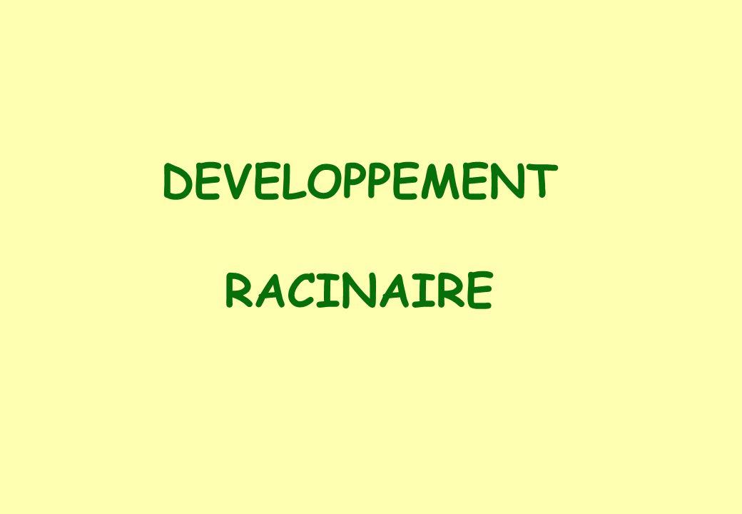 DEVELOPPEMENT RACINAIRE