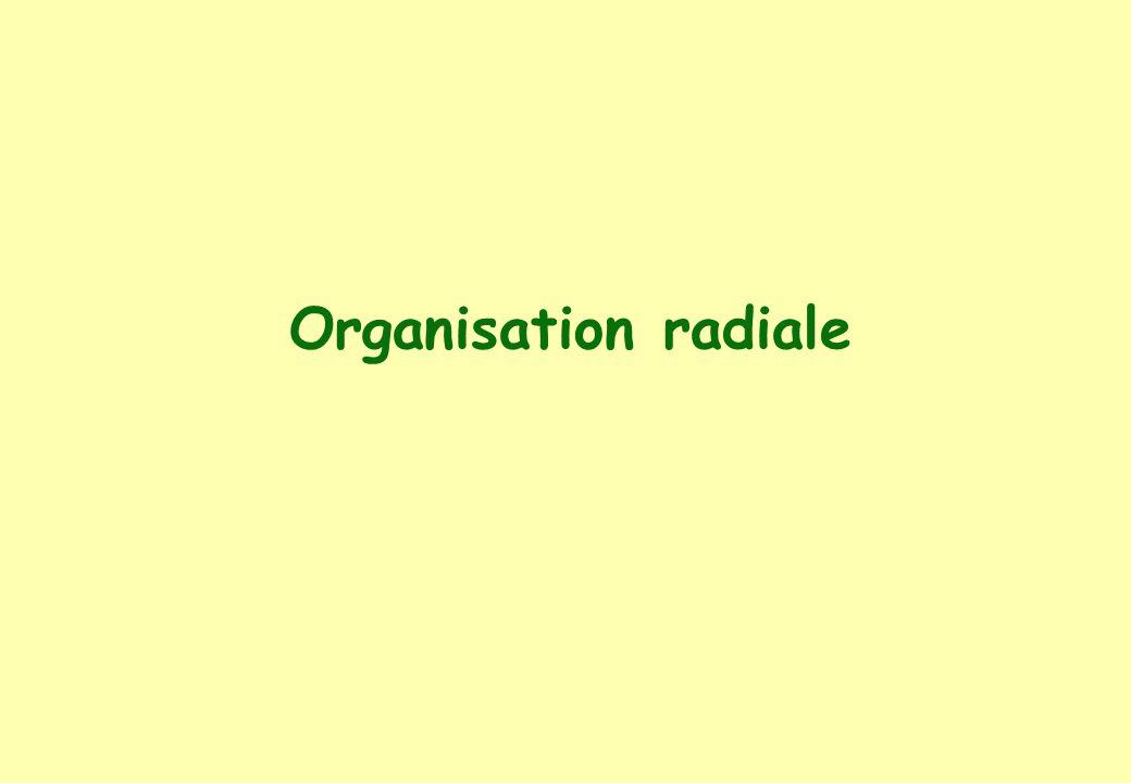 Organisation radiale