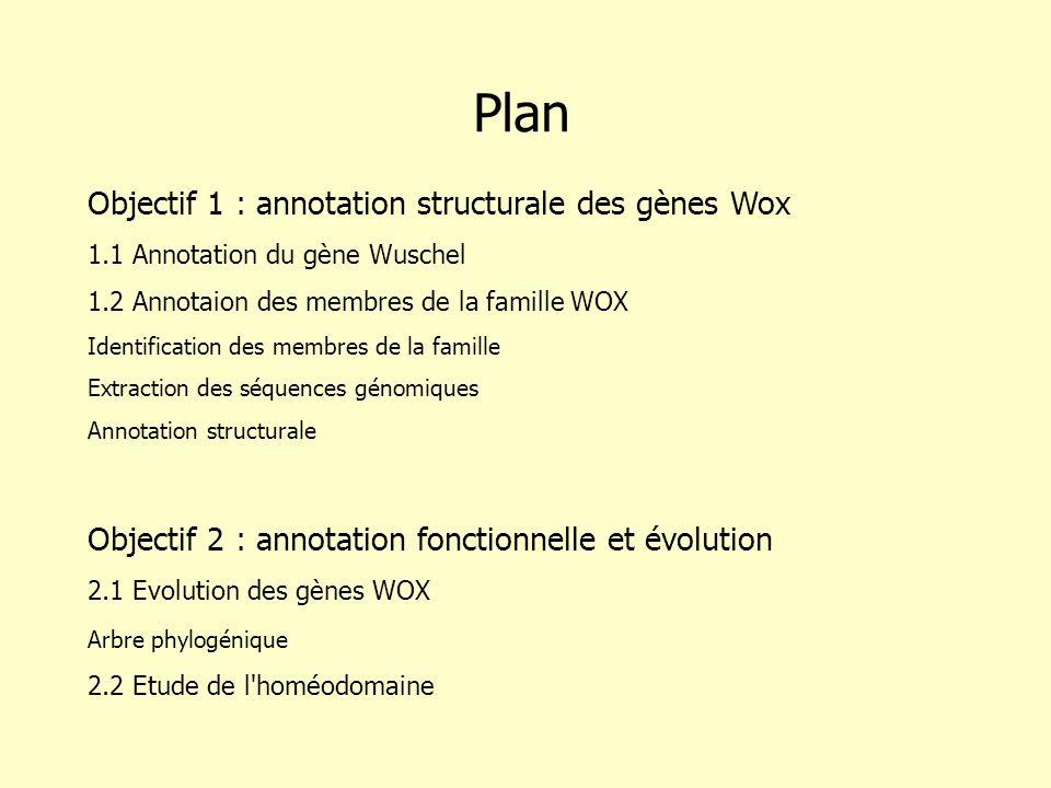 Objectif 1 : annotation structurale des gènes Wox 1.1 Annotation du gène Wuschel 1.2 Annotaion des membres de la famille WOX Identification des membres de la famille Extraction des séquences génomiques Annotation structurale Objectif 2 : annotation fonctionnelle et évolution 2.1 Evolution des gènes WOX Arbre phylogénique 2.2 Etude de l homéodomaine Plan