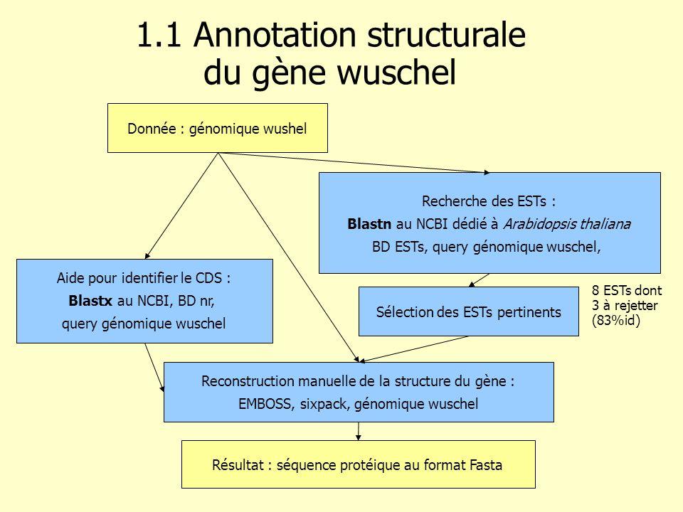 Recherche des ESTs : Blastn au NCBI dédié à Arabidopsis thaliana BD ESTs, query génomique wuschel, Donnée : génomique wushel 1.1 Annotation structurale du gène wuschel Sélection des ESTs pertinents Reconstruction manuelle de la structure du gène : EMBOSS, sixpack, génomique wuschel Résultat : séquence protéique au format Fasta 8 ESTs dont 3 à rejetter (83%id) Aide pour identifier le CDS : Blastx au NCBI, BD nr, query génomique wuschel