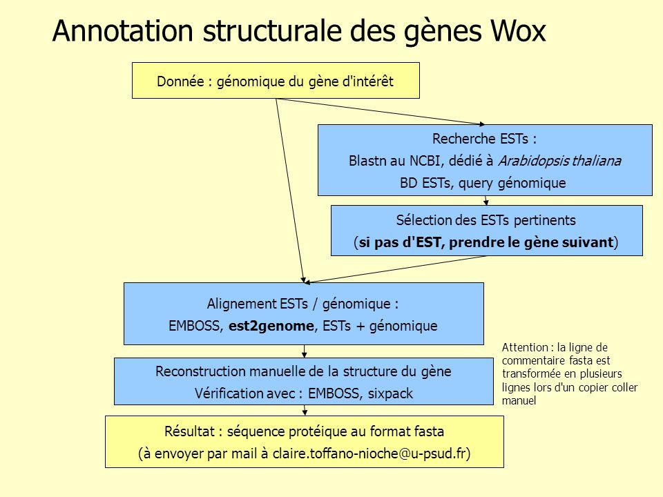 Recherche ESTs : Blastn au NCBI, dédié à Arabidopsis thaliana BD ESTs, query génomique Alignement ESTs / génomique : EMBOSS, est2genome, ESTs + génomique Donnée : génomique du gène d intérêt Annotation structurale des gènes Wox Sélection des ESTs pertinents (si pas d EST, prendre le gène suivant) Reconstruction manuelle de la structure du gène Vérification avec : EMBOSS, sixpack Résultat : séquence protéique au format fasta (à envoyer par mail à claire.toffano-nioche@u-psud.fr) Attention : la ligne de commentaire fasta est transformée en plusieurs lignes lors d un copier coller manuel